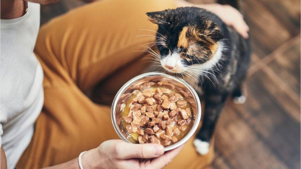 Katzen richtig füttern: So bleibt Ihr Haustier gesund