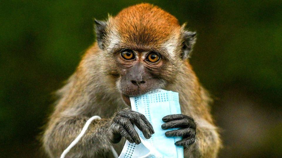 Mund-Nasen-Schutze bedrohen die Tierwelt