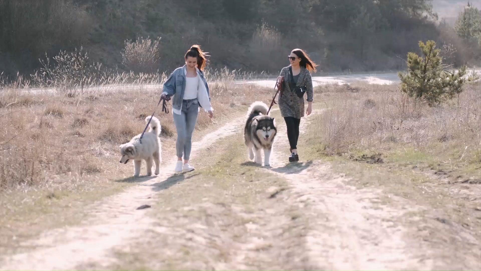 Aus der Forschung: Wie Hunde ihre Besitzer fit halten