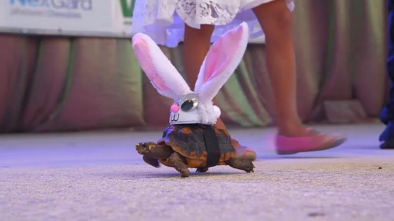 Hasenschildkröte und Hundetutu: Menschen verkleiden Haustiere