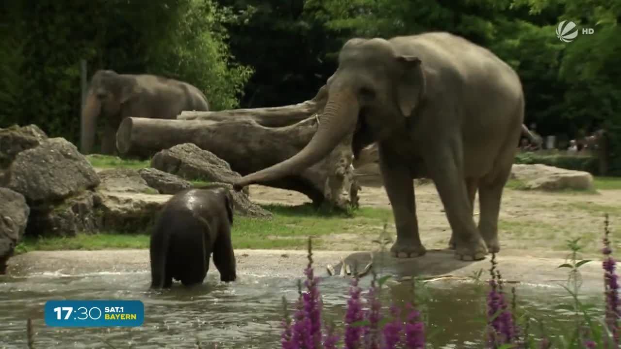 Nachwuchs-Boom im Tierpark Hellabrunn