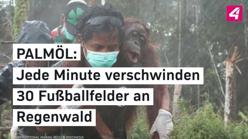 Palmol Jede Minute Verschwinden 30 Fussballfelder An Regenwald